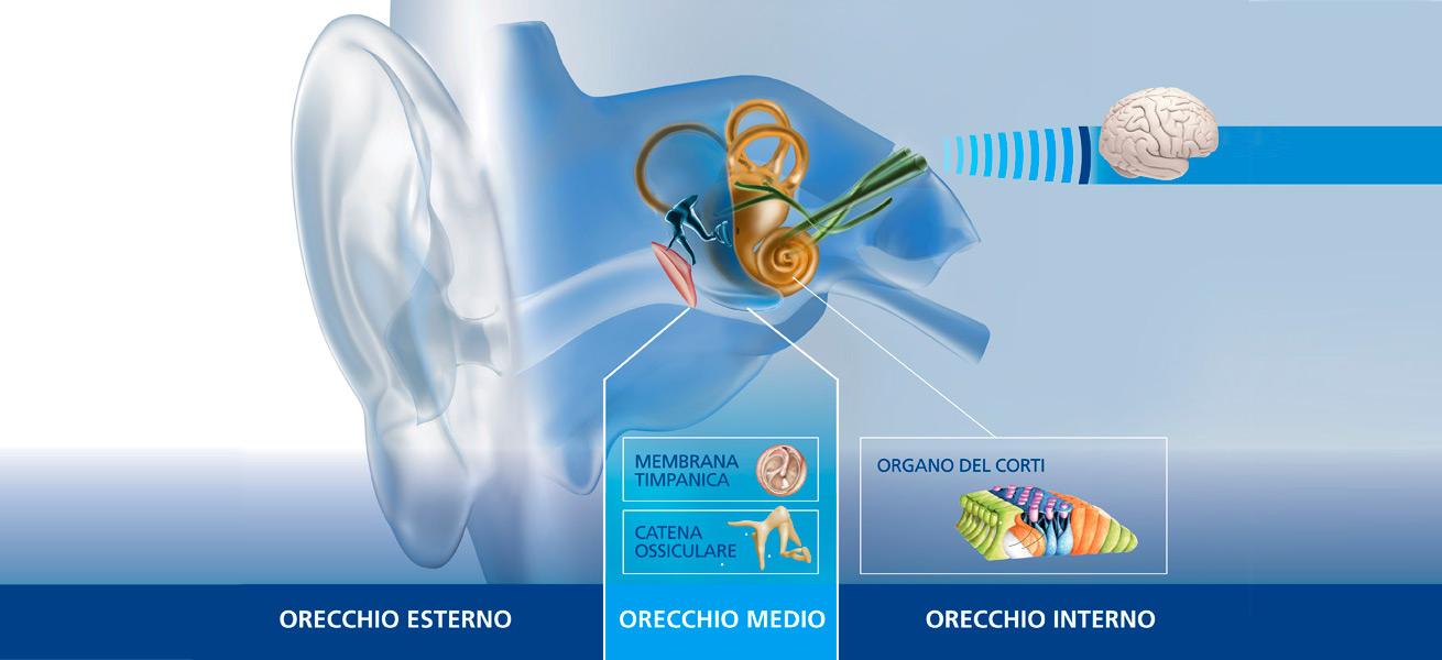 Audiofocus fisiologia orecchio